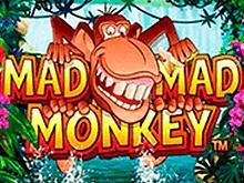 Играть игровой аппарат Mad Mad Monkey онлайн на реальные деньги
